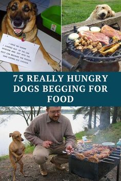 75 hilarious dogs with zero shame begging for food True Memes, Funny Memes, Hilarious, Jokes, Funny Dog Photos, Funny Dogs, Funny Pictures, Hilarous Memes, Comedy Clips