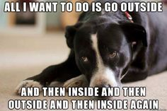 : Memes Only Dog Owners Would Understand   Obsev