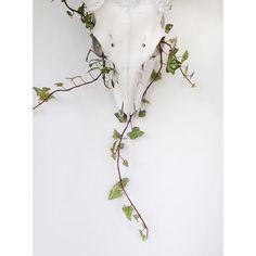 #lastone  #skull #deer #hiedra #ivy #bone #plant #plantstagram #decor #decoration #white #cdmx #mexico #leaves