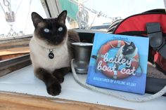Has your cat been published yet? How Bailey Boat Cat went from blog to book   Australian Writers' Centre