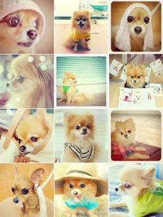 Pomeranian by fay