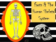 Facts+and+the+Human+Skeletal+System+from+TiePlay+Educational+Resources+LLC+on+TeachersNotebook.com+-++(15+pages)++-+Price+$4.00+Dem+bones,+dem+bones,+dem+dry+bones.....perfect+science+learning+for+Fall!+In+Facts+and+the+Human+Skeletal+System,+learners+answer+questions+after+reading+facts+and+studying+anatomy.
