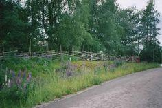 Skogsbryn vid Munsala i finländska Österbotten