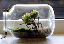 Bonsai Moosbaum im Einmachglas-Terrarium selber basteln