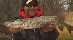 Video: Fly-Fishing for Muskies and Pike on the Upper Mississippi - Orvis News