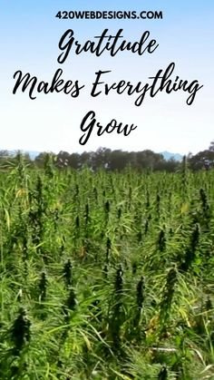 Green Business, Business Motivation, Hemp Oil, Farm Life