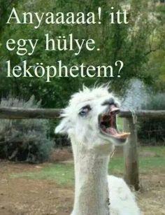 Anyaaa! :D