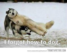 How do I dog?