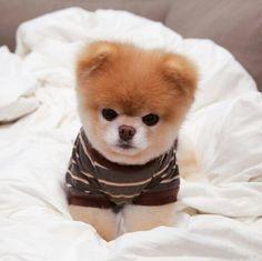 Boo... in a cute little T-shirt!