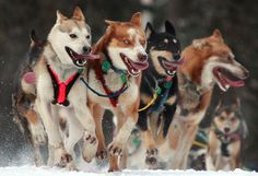 Huskies !!!