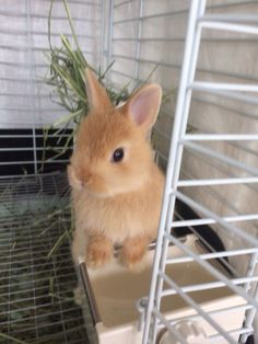please food – Marianne Wevers - Baby Animals Cute Baby Bunnies, Baby Animals Super Cute, Pretty Animals, Cute Little Animals, Cute Funny Animals, Cute Bunny Pictures, Baby Animals Pictures, Cute Animal Pictures, Fluffy Animals