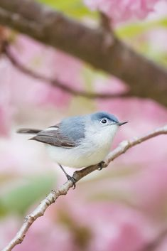 A beautiful cute bird #cute #bird #cuteanimals #TheWorldIsGreat