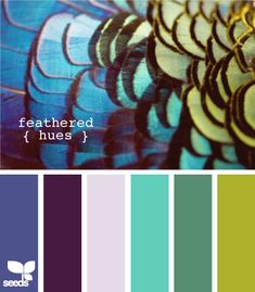 Feathered Hues Color Combination from Design Seeds . Colour Pallette, Color Palate, Colour Schemes, Color Combos, Color Patterns, Design Seeds, Paleta Pantone, Peacock Colors, Peacock Feathers
