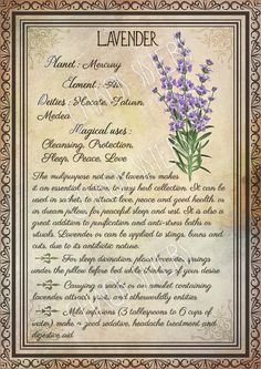 Printable Herbs Book of Shadows Pages Set Herbs & Plants Correspondence, Grimoire Pages, Witchcraft, Wicca, Printable BOS Wicca Herbs, Witchcraft Herbs, Witchcraft Books, Green Witchcraft, Magick, Hoodoo Spells, Magic Herbs, Herbal Magic, Plant Magic