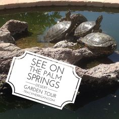 Turtle tales #PalmSprings Desert Garden Tour Sunday, April 12 from noon to 4pm link for details at TracyMerrigan.com