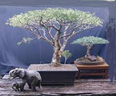 LOVE the incorporation of the Elephants in the scene! ...b... Image result for pierneef bonsai