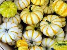 Basket Of Striped Pumpkins