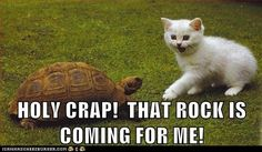 funny cat pictures - HOLY CRAP!  THAT ROCK IS COMING FOR ME!