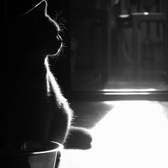 """He lives in the half lights, in far away places, free and alone--this little-great being whom his mistress calls, 'My Cat.'"" --Margaret Benson"