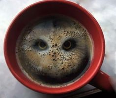 Owl hiding in a cup of coffee