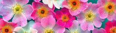 Unique Colorful Illustrative Flowers Website Header