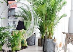 online plant shop