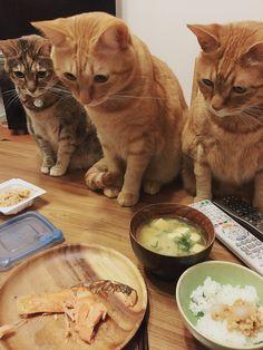 """これは食べにくい… ある食卓の、緊張感あふれる""""焼き魚包囲シリーズ""""が話題"""