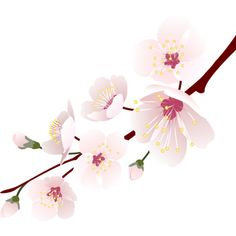 cherry blossoms ❤ liked on Polyvore featuring flowers, backgrounds, fillers, pink, flores and effects