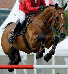 Hunter jumper eventing horse equine grand prix