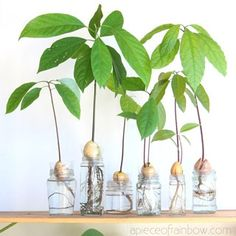 2 easy ways to grow avocado tree from seed in soil or water, better than toothpicks method! Best tips on germination, indoor & outdoor planting, & more! – A Piece of Rainbow #indoorplants #houseplants #gardening #indoorgarden #farmhouse #boho #bohemian #homedecor #livingroom #bedroom indoor plants, houseplants, gardening, indoor garden, modern, farmhouse, boho, bohemian, home décor, living room, bedroom, propagation station #propagation Christmas Planters, Fall Planters, Outdoor Christmas Decorations, Christmas Crafts, Indoor Garden, Indoor Plants, Indoor Outdoor, Winter Planter, Herb Garden In Kitchen