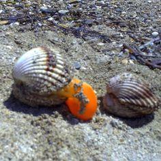 Shell in Croatia #croatia #chorwacja #shell