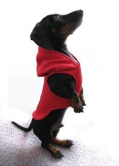 FREE custom Sewing pattern drafting tutorial for this adorable puppy dog hoodie jacket for fall / winter! 35 DIY Dog Coats