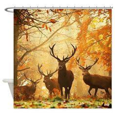 The forest becomes brighter as the canopy falls, the deer more alert as the trees cease to cover them. beautiful creatures belong in pictures, not on walls. Nature Animals, Animals And Pets, Cute Animals, Autumn Animals, Nature Nature, Nature Images, Baby Animals, Wild Animals Pictures, Animal Pictures