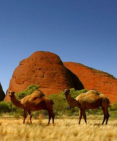 Pyndan Camel Tracks, south west of Alice Springs, Northern Territory, Australia