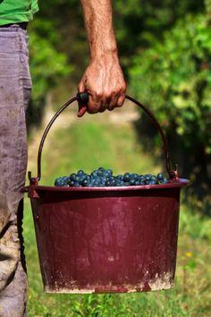 A bucket of fresh blueberries