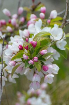 Cherry Blossom Икебана, Весна Цветение, Весенние Цветы, Растения, Розовый, Цветы, Фоновые Изображения