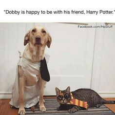 Definitely dressing Toby up in a Dobby costume