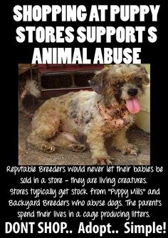I personally don't think there are any reputable breeders when countless millions die every year in shelters because there too many animals and not enough homes.    #pets #care #puppy #dogs #puppymills #freedom #educate