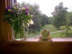 Wildflower Farm https://www.airbnb.com/rooms/3978799 www.cafeprimrose.com