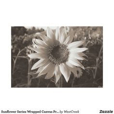 Sunflower Series Wrapped Canvas Print