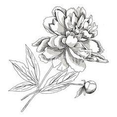 blumen skizze Set von Hand gezeichnet Blumen Illustration