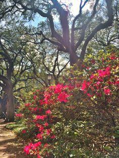 Springtime in Savannah, Georgia.