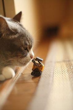 wall-e meets cat