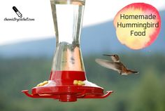 A great homemade hummingbird food recipe plus very important tips on using it properly and keeping your feeder bacteria free.