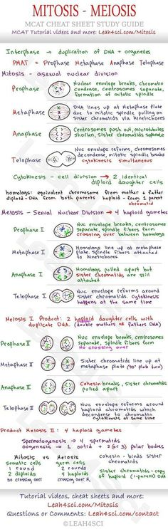 biology notes Mitosis and Meiosis MCAT Cheat Sheet Study Guide - learn what happens in each step: Prophase, Metaphase, Anaphase, Telophase and how they all tie together Ap Biology, Teaching Biology, Science Biology, Life Science, College Teaching, Science Notes, Science Notebooks, Science Penguin, Physical Science
