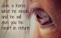 horse inspiration - Google Search