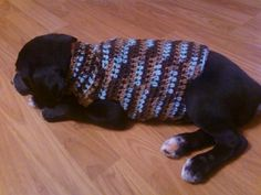 Another dog sweater. No pattern, but the general concept is great.