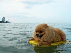 ups!! creo que me he alejado demasiado de la costa...