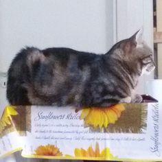Perché stai in pizzo? #buongiorno  dal #gatto #goodmorning #cat #colazione #breakfast #estate #summer