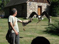 Excursión con niños para ver águilas #viajes #excursionesconniños
